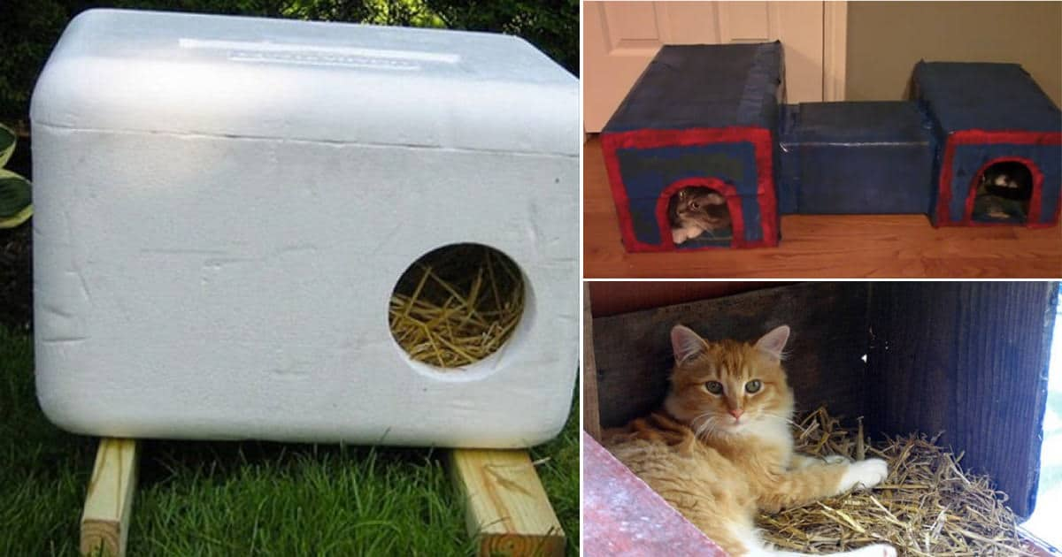 23 DIY Insulated Cat House Ideas For Outdoor Cats ⋆ Bright ... Feral Cat House Plans Storage Bin on fancy cat house plans, furniture building plans, kitty house plans, cat feeding station plans, bear house plans, rabbit house plans, wood cat house plans, heated cat house plans, squirrel house plans, outdoor cat house plans, wooden cat house plans, raccoon house plans, dog house plans, cat tree house plans, cat enclosure plans, mallard house plans, winter cat house plans, cat shelter plans, homesteaders house plans, pet cat house plans,