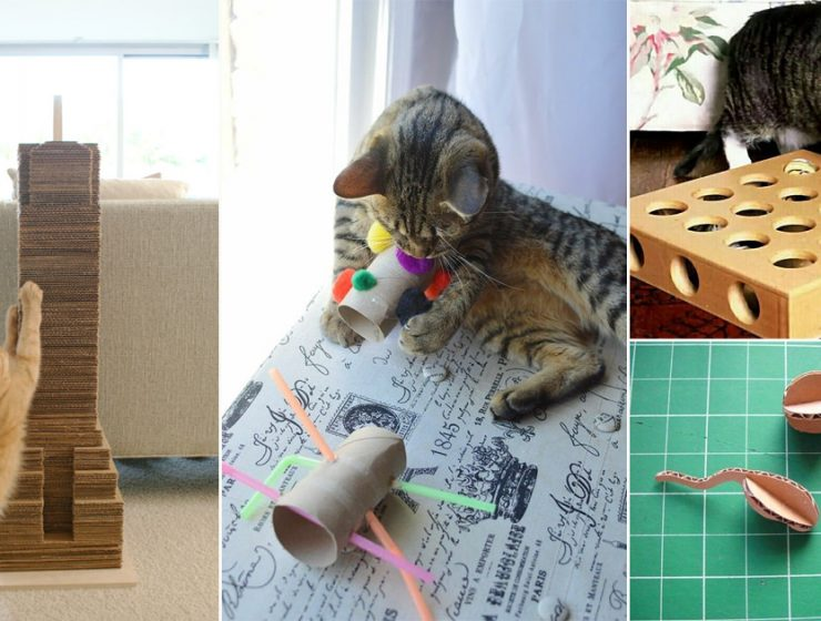 These DIY Cardboard Cat Toys are easy to build and cost-effective, make them to provide fun-filled time to your feline friend.