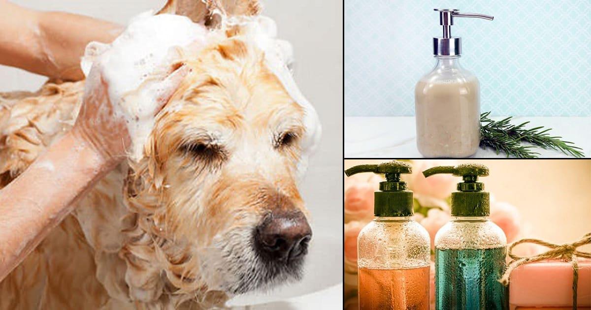 27 DIY Flea Shampoo For Dogs To Get Rid