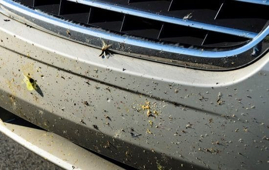 Home Remedies to Get Bugs Off of Your Car2