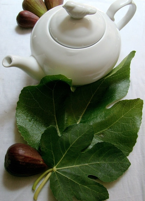 Fig Tree Leaves Tea Benefits2