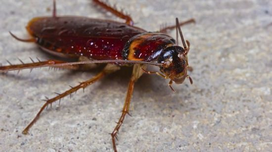 how to get rid of cockroaches home remedies3