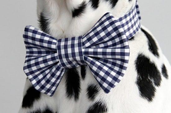 DIY Dog Bow Tie3