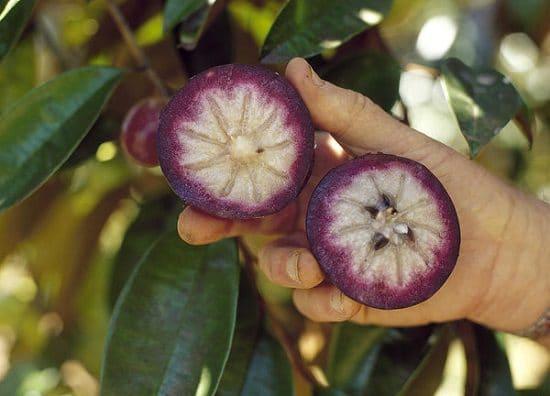 Star Apple Leaves Health Benefits1