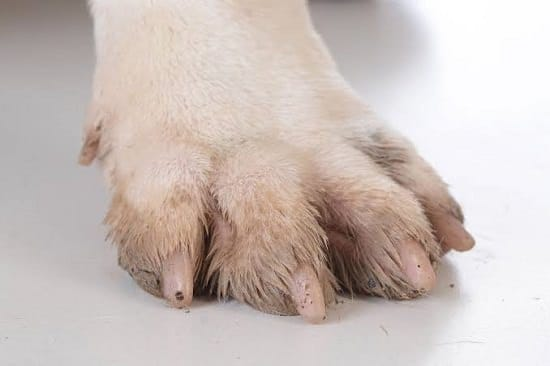 Dog Brittle Nails Remedy
