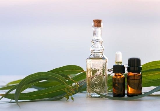 Essential Oils to Get Rid of Flies2