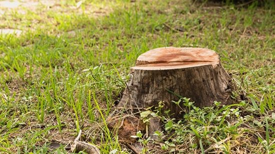 How to Get Rid of a Tree Stump With Charcoal1
